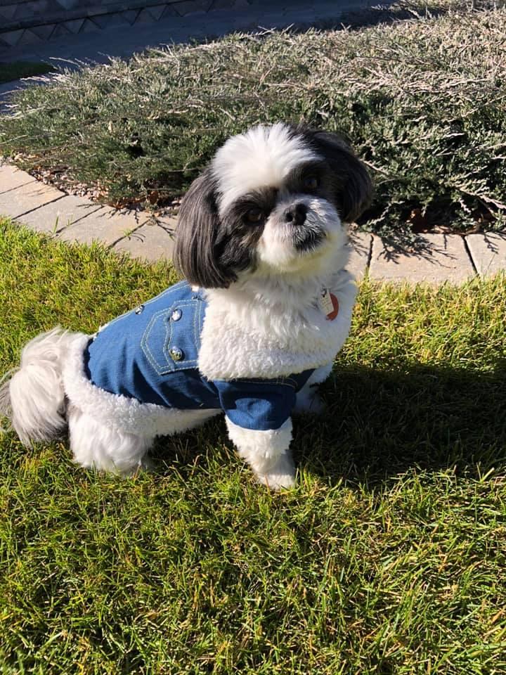 Bowser in denim jacket