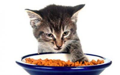 catfood-1